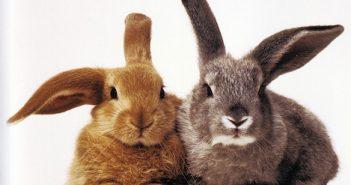 2 Rabbits small