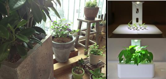 """어머니 집의 식물들이 언제나 반짝반짝한 비결을 어느날 물었다. """"물만 주지 말고 사랑을 주면 잘 자란단다. 아침에 일어나면 '잘잤니' 인사하고 집에 들어오면 '잘있었니' 인사해주렴!""""  나도 이제 내 식물들과 대화를 할 수 있게 될까? (오른쪽은 'Click & Grow Flower Smartpot'. 출처 http://www.cnet.com/products/click-grow-smart-flowerpot/)"""