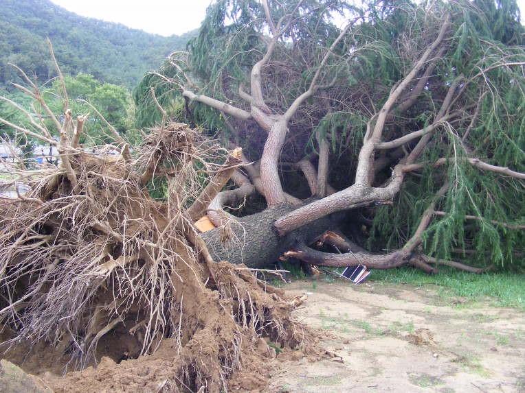 쓰러진나무